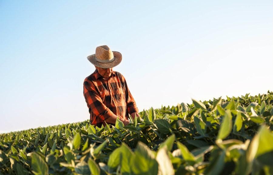 Conheça Como Funciona a aposentadoria do Trabalhador Rural e seus Direitos